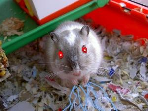 evil-gerbil